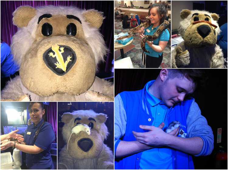Collage photo of Charlie bear and his rangers holding different types of animals