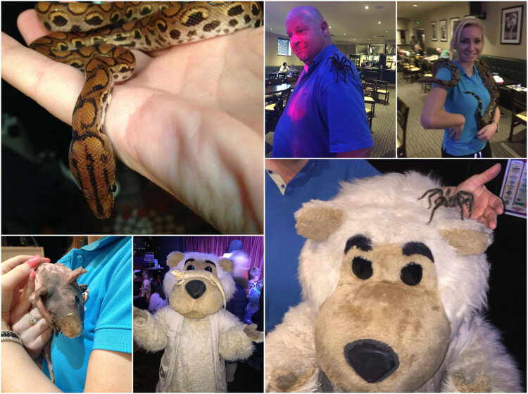 Entertainment staff and Charlie bear holding different animals