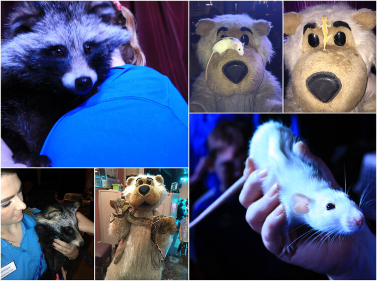 Collage of Talacre Beach staff holding different animals including a rat and raccoon