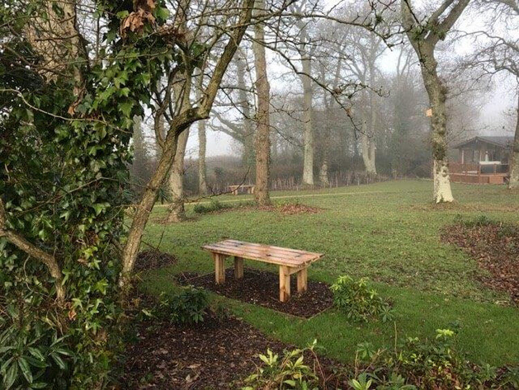 Photo of the surrounding woodlands at Wareham Forest Lodge Retreat
