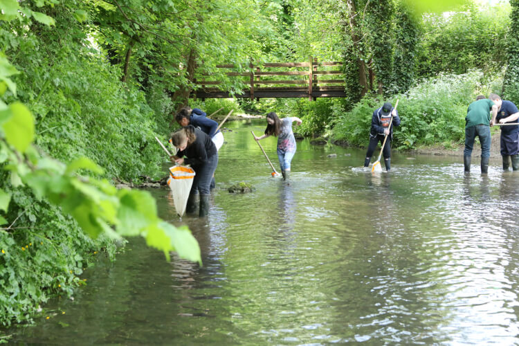 photo of the group netting in the Newton Brook