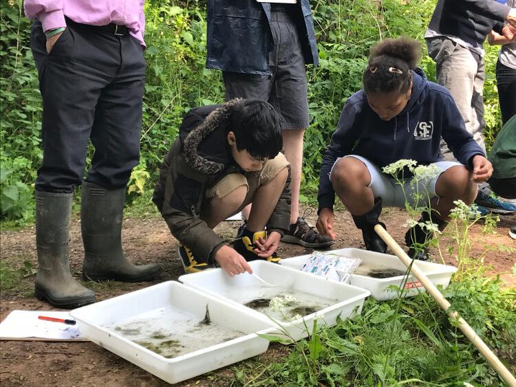 Children studying eels before release