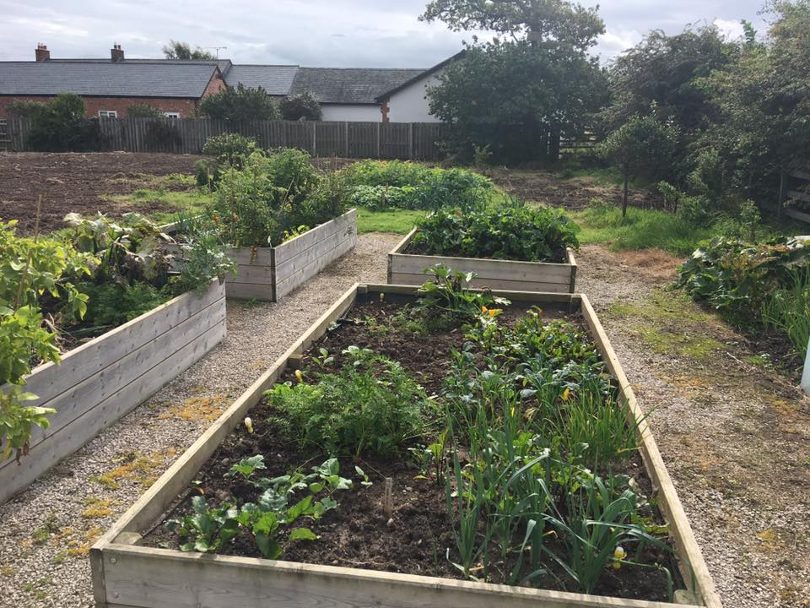 Vegetable allotment at New Pines