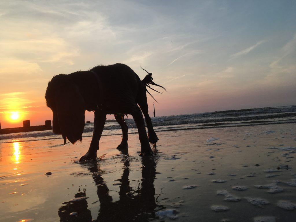 Photo of a dog during a beautiful sunset at Rhyl beach