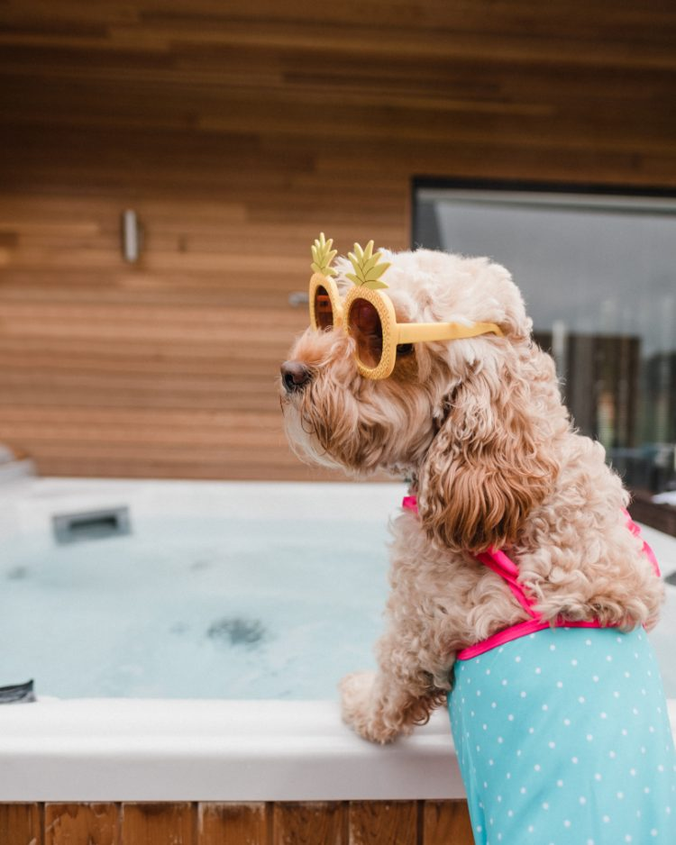 Cockapoo Marley stood by a hot tub wearing sunglasses