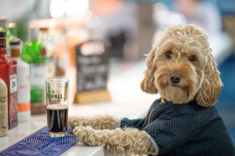 Cockapoo Marley sat at the bar