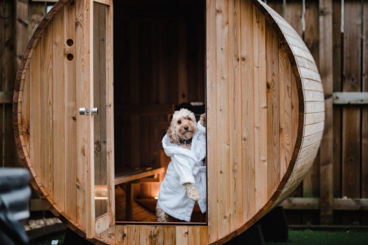 Cockapoo Marley stood by the sauna