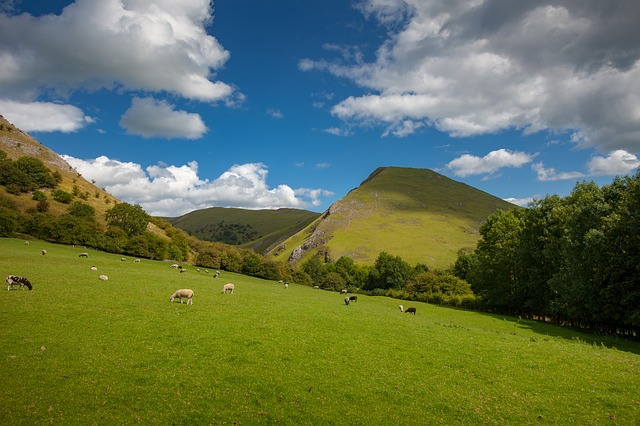 Photo of sheep grazing at Thorpe Cloud in Dovedale, Peak District