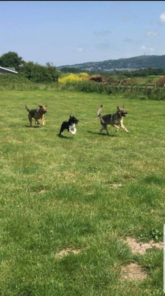 three dogs running in the dog field at new pines