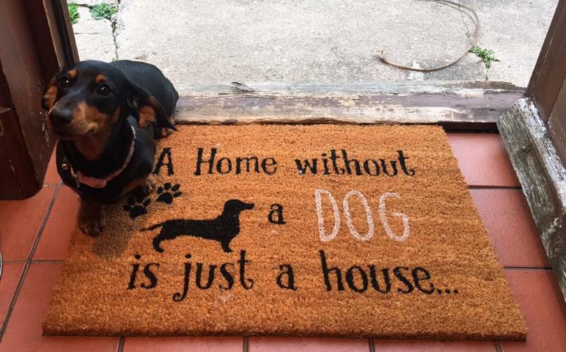 sausage dog next to doormat