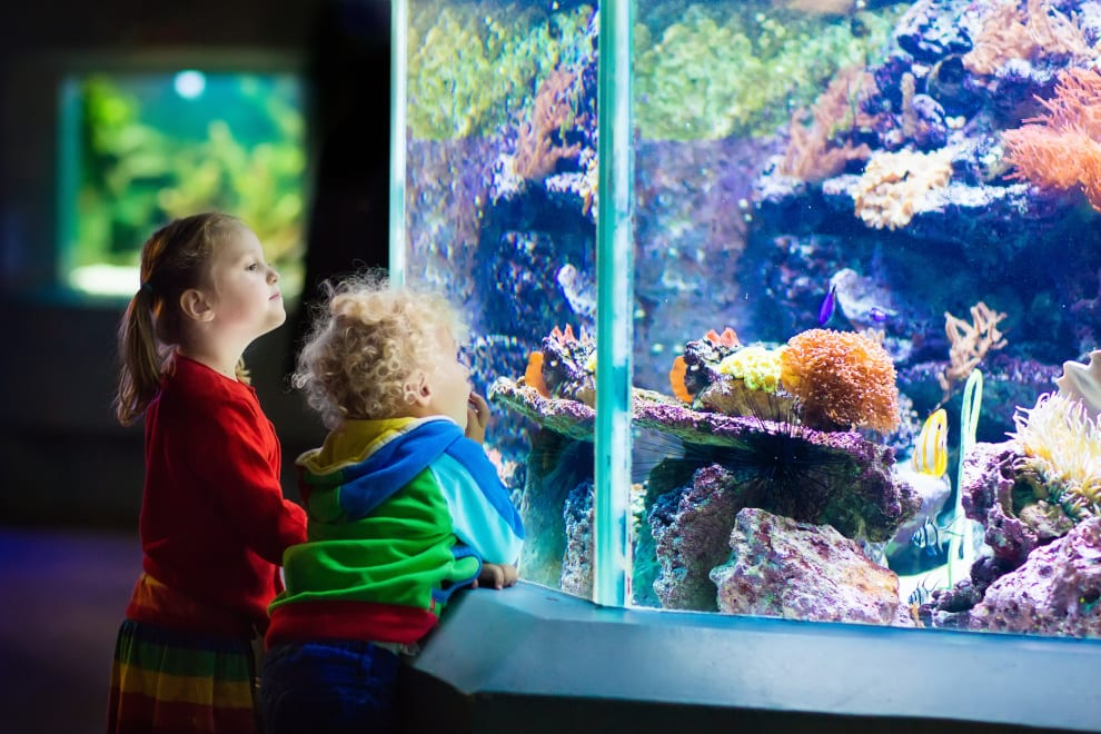 childrens looking at a colourful aquarium filled with fish